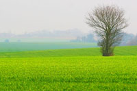 Fields around Wattisham